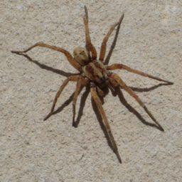 Уничтожение пауков в Симферополе